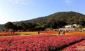 广东100条森林旅游特色路线从化入选的有哪些?
