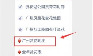 2020年10月广州木芙蓉进入全年盛花期