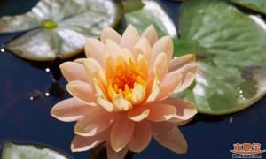 2021年5月广州哪里可以赏花?5月广州赏花的地方