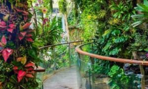 2020广州正佳雨林生态植物园国庆节门票多少钱?